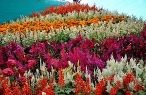the-valley-of-of-flowers_7452131_l