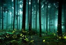 India's Mysterious Glowing Forest